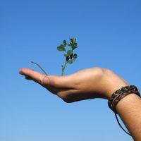 Támogató gyakorlat a teremtéshez – Készülj – 10 milliószoros nap