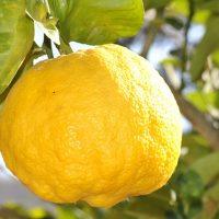 Mire használhatod a citrom illóolajat?